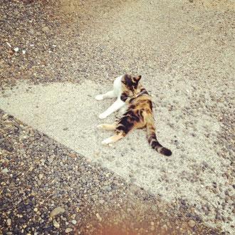 本日のオフショット:わたしの飼っている猫にゃん☆