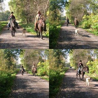 mit dem Hund auf Wanderritt