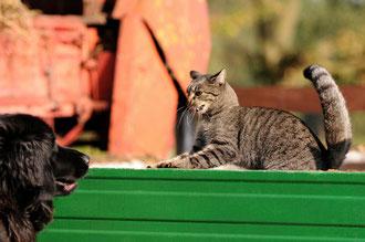 Zusammenführung von Hund und Katze