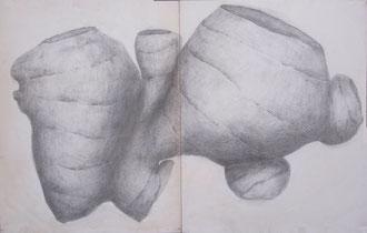 生姜(鉛筆画)