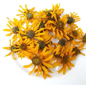 Topinambur Blüte gepresst