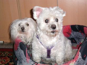 Cesar und Kessy
