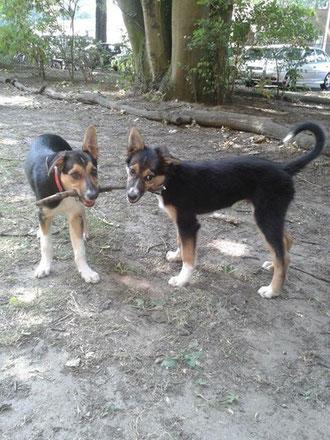 Aidan und Haru, 13 Wochen alt