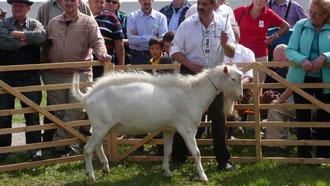 Felix im Ring bei der Ziegenschau 20120 in Bad Windsheim