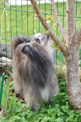 4.4.12 Gudisuche im Garten: ist es evt. im Baum?