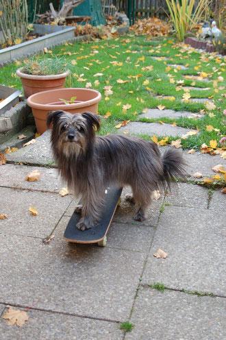 Ladys neuer Sport: das Skateboarden