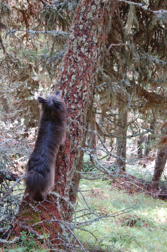 Lady klettert auf einen Baum einem Eichhörnchen nach
