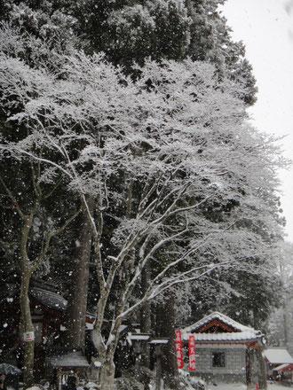 鍛冶神社と雪花