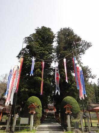 五月の杉の参道