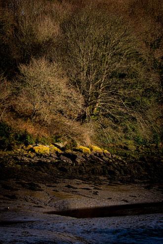 Plouguerneau Aber Vrac'h reflet bleu rocher lichen algues jaune arbre hiver