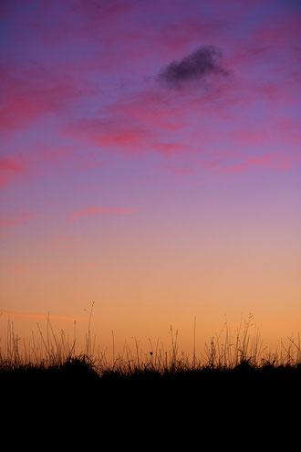 Plouguerneau coucher de soleil nuages rose bleu violet lande dune herbes Bretagne
