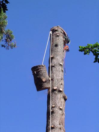 abattage elagage abattage d 39 arbre d licat 92 78 idf vall e d 39 aspe 64 arboriste. Black Bedroom Furniture Sets. Home Design Ideas