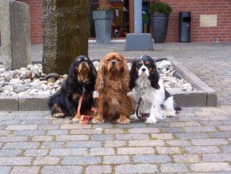 Alice, Willy, Babette in Lingen