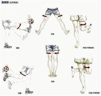 股関節の動き