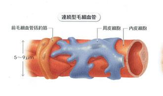 「人体の正常構造と機能」より