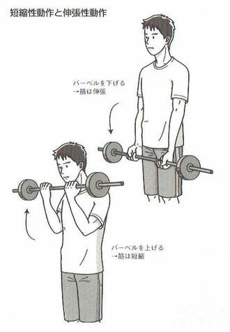 短縮性動作と伸張性動作