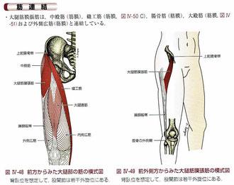 改訂版第2版 骨格筋と触察法