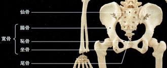 仙骨・寛骨・尾骨
