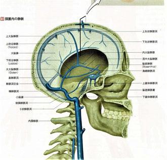 頭蓋内の静脈と矢状静脈洞