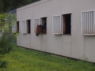 かわいい。馬って本当に姿形が美しいなぁと思います