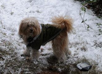 Snoopy en la nieve, un miembro mas de la familia de Ionhar