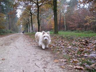 Hey Leute, heute darf ich euch zu unserem Herbstspaziergang einladen!!!!