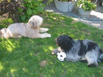....bei meiner WACHE mußte ich den Ball wieder gegen Finn verteidigen...