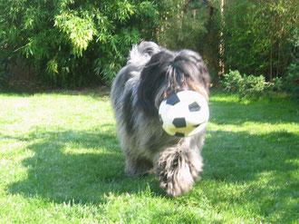 War aber ganz schön anstrengend, den Ball vor den Anderen in Sicherheit zu bringen!!!