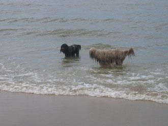 Hey Oskar....lass uns mal Synchronschwimmen!!