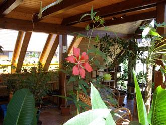 Wintergarten mit Palustris, zum vergrößern einfach Bild anklicken