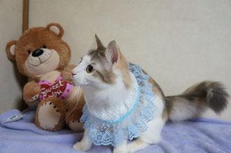 ヴィヴィちゃん、かわいいよ~♪