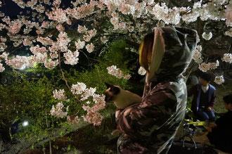 チャムちゃん桜キレイでしょ