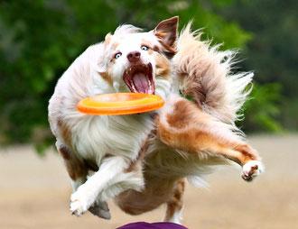 Frisbee Dog Graffi