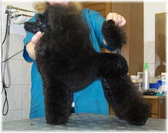 17. Februar 2011 Rieke frisch vom Friseur! Vielen DANK Sabine!