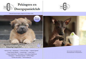 Clubblad mrt 2014 by Pekingees en Dwergspanielclub issuu