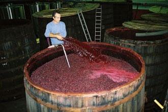 La fermentation la p remption et la conservation des aliments tpe - Conservation du vin rouge ...