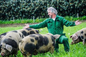 Es gibt auch echte Freilandschweine auf dem Pötterhof. Hier ein paar Bunte Bentheimer