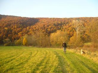 Wiesenwege entlang der fränkischen Saale.