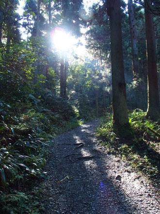 もう1時間ぐらい早ければ、木々を通り抜ける光線のひとつひとつまで見えただろうに。