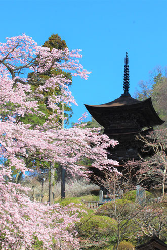 Daihou-ji Temple three story pagoda in spring.