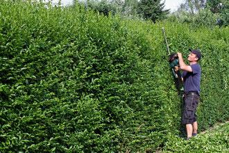 Grünflächenpflege & Gartenpflege in Berlin