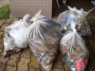 1時間でこれだけのゴミを回収しました