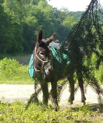 Paula: unser erster Esel - groß, stark und lieb