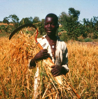 Jean-Baptiste Bayala aus Didir, hier bei der Ernte