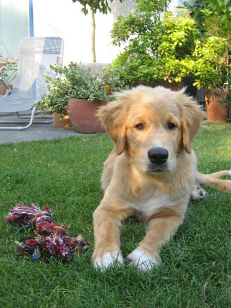 Hugo posiert im Garten