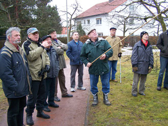 Fachgerechte Erläuterung zur Baumpflege am Rathaus