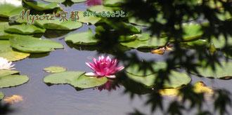 マイソール京都