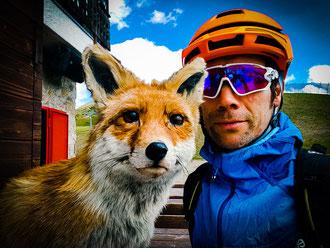 Fuchs und Hase auf einer Biketour in Livigno