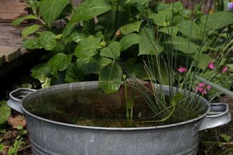 Feuchtbiotop für die Terrasse oder den Balkon