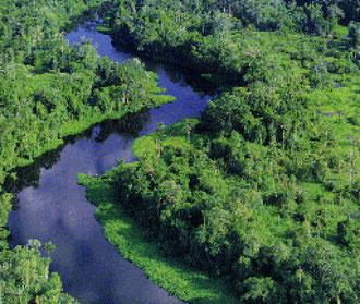 Il fiume Kourou visto dal cielo